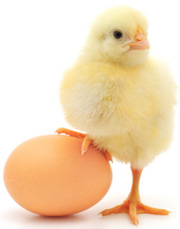chicken-and-egg-smaller