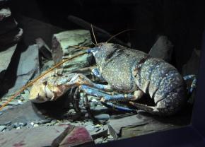 Jovina cooks Italian: LobsterSalad